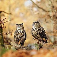 Eulen / Owls 2019 - Produktdetailbild 10