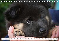 Eurasier, der Hund im Wolfspelz (Tischkalender 2019 DIN A5 quer) - Produktdetailbild 5