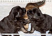 Eurasier, der Hund im Wolfspelz (Tischkalender 2019 DIN A5 quer) - Produktdetailbild 4