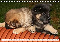 Eurasier, der Hund im Wolfspelz (Tischkalender 2019 DIN A5 quer) - Produktdetailbild 11