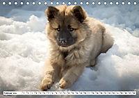 Eurasier, der Hund im Wolfspelz (Tischkalender 2019 DIN A5 quer) - Produktdetailbild 2
