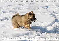 Eurasier, der Hund im Wolfspelz (Tischkalender 2019 DIN A5 quer) - Produktdetailbild 1