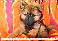 Eurasier, der Hund im Wolfspelz (Tischkalender 2019 DIN A5 quer) - Produktdetailbild 8