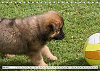Eurasier, der Hund im Wolfspelz (Tischkalender 2019 DIN A5 quer) - Produktdetailbild 7