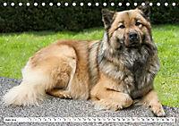 Eurasier, der Hund im Wolfspelz (Tischkalender 2019 DIN A5 quer) - Produktdetailbild 6