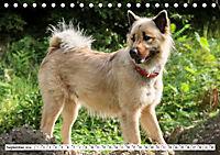 Eurasier, der Hund im Wolfspelz (Tischkalender 2019 DIN A5 quer) - Produktdetailbild 9