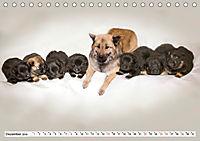 Eurasier, der Hund im Wolfspelz (Tischkalender 2019 DIN A5 quer) - Produktdetailbild 12