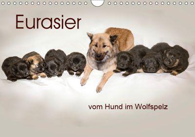 Eurasier, der Hund im Wolfspelz (Wandkalender 2019 DIN A4 quer), Peter Überall
