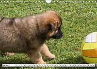 Eurasier, der Hund im Wolfspelz (Wandkalender 2019 DIN A4 quer) - Produktdetailbild 7