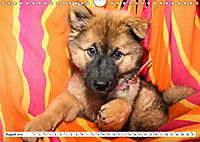 Eurasier, der Hund im Wolfspelz (Wandkalender 2019 DIN A4 quer) - Produktdetailbild 8