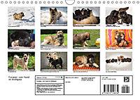 Eurasier, der Hund im Wolfspelz (Wandkalender 2019 DIN A4 quer) - Produktdetailbild 13