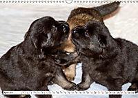 Eurasier, der Hund im Wolfspelz (Wandkalender 2019 DIN A3 quer) - Produktdetailbild 4