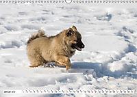 Eurasier, der Hund im Wolfspelz (Wandkalender 2019 DIN A3 quer) - Produktdetailbild 1