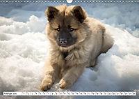 Eurasier, der Hund im Wolfspelz (Wandkalender 2019 DIN A3 quer) - Produktdetailbild 2