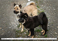 Eurasier, der Hund im Wolfspelz (Wandkalender 2019 DIN A3 quer) - Produktdetailbild 10