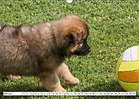 Eurasier, der Hund im Wolfspelz (Wandkalender 2019 DIN A3 quer) - Produktdetailbild 7
