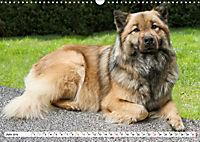 Eurasier, der Hund im Wolfspelz (Wandkalender 2019 DIN A3 quer) - Produktdetailbild 6