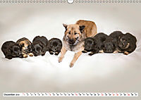 Eurasier, der Hund im Wolfspelz (Wandkalender 2019 DIN A3 quer) - Produktdetailbild 12