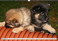 Eurasier, der Hund im Wolfspelz (Wandkalender 2019 DIN A3 quer) - Produktdetailbild 11