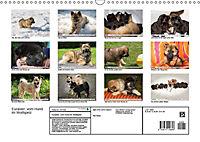 Eurasier, der Hund im Wolfspelz (Wandkalender 2019 DIN A3 quer) - Produktdetailbild 13