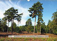 Europäische Heidelandschaften (Wandkalender 2019 DIN A3 quer) - Produktdetailbild 7