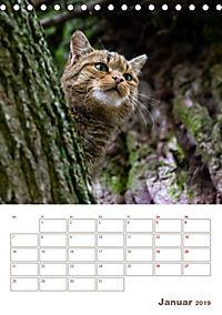 Europäische Wildkatzen - Jahresplaner (Tischkalender 2019 DIN A5 hoch) - Produktdetailbild 1