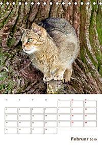 Europäische Wildkatzen - Jahresplaner (Tischkalender 2019 DIN A5 hoch) - Produktdetailbild 2