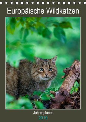 Europäische Wildkatzen - Jahresplaner (Tischkalender 2019 DIN A5 hoch), Janita Webeler