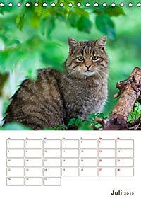 Europäische Wildkatzen - Jahresplaner (Tischkalender 2019 DIN A5 hoch) - Produktdetailbild 7