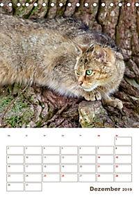 Europäische Wildkatzen - Jahresplaner (Tischkalender 2019 DIN A5 hoch) - Produktdetailbild 12
