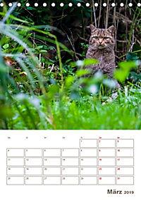 Europäische Wildkatzen - Jahresplaner (Tischkalender 2019 DIN A5 hoch) - Produktdetailbild 3