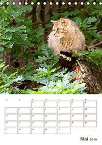 Europäische Wildkatzen - Jahresplaner (Tischkalender 2019 DIN A5 hoch) - Produktdetailbild 5