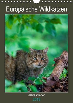 Europäische Wildkatzen - Jahresplaner (Wandkalender 2019 DIN A4 hoch), Janita Webeler