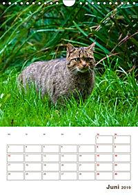 Europäische Wildkatzen - Jahresplaner (Wandkalender 2019 DIN A4 hoch) - Produktdetailbild 6