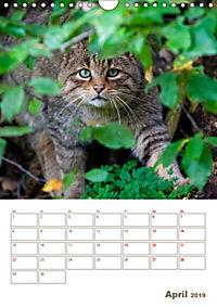 Europäische Wildkatzen - Jahresplaner (Wandkalender 2019 DIN A4 hoch) - Produktdetailbild 4