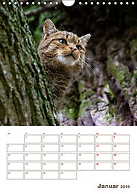 Europäische Wildkatzen - Jahresplaner (Wandkalender 2019 DIN A4 hoch) - Produktdetailbild 1