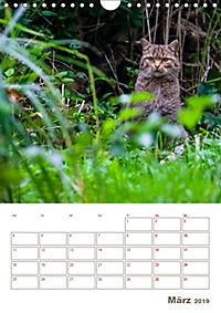 Europäische Wildkatzen - Jahresplaner (Wandkalender 2019 DIN A4 hoch) - Produktdetailbild 3
