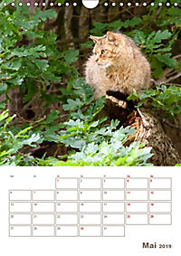 Europäische Wildkatzen - Jahresplaner (Wandkalender 2019 DIN A4 hoch) - Produktdetailbild 5