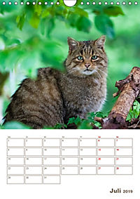 Europäische Wildkatzen - Jahresplaner (Wandkalender 2019 DIN A4 hoch) - Produktdetailbild 7