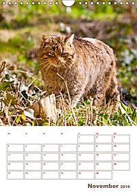 Europäische Wildkatzen - Jahresplaner (Wandkalender 2019 DIN A4 hoch) - Produktdetailbild 11
