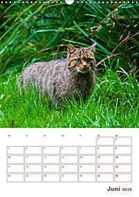 Europäische Wildkatzen - Jahresplaner (Wandkalender 2019 DIN A3 hoch) - Produktdetailbild 6