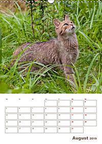 Europäische Wildkatzen - Jahresplaner (Wandkalender 2019 DIN A3 hoch) - Produktdetailbild 8
