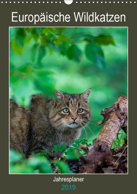 Europäische Wildkatzen - Jahresplaner (Wandkalender 2019 DIN A3 hoch), Janita Webeler