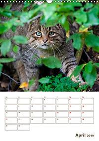 Europäische Wildkatzen - Jahresplaner (Wandkalender 2019 DIN A3 hoch) - Produktdetailbild 4