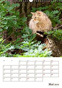 Europäische Wildkatzen - Jahresplaner (Wandkalender 2019 DIN A3 hoch) - Produktdetailbild 5