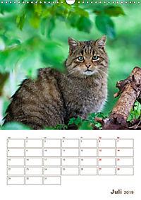 Europäische Wildkatzen - Jahresplaner (Wandkalender 2019 DIN A3 hoch) - Produktdetailbild 7