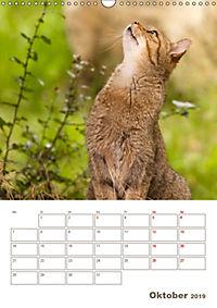Europäische Wildkatzen - Jahresplaner (Wandkalender 2019 DIN A3 hoch) - Produktdetailbild 10