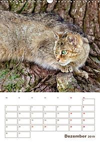 Europäische Wildkatzen - Jahresplaner (Wandkalender 2019 DIN A3 hoch) - Produktdetailbild 12