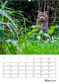 Europäische Wildkatzen - Jahresplaner (Wandkalender 2019 DIN A2 hoch) - Produktdetailbild 3