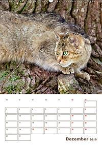 Europäische Wildkatzen - Jahresplaner (Wandkalender 2019 DIN A2 hoch) - Produktdetailbild 12